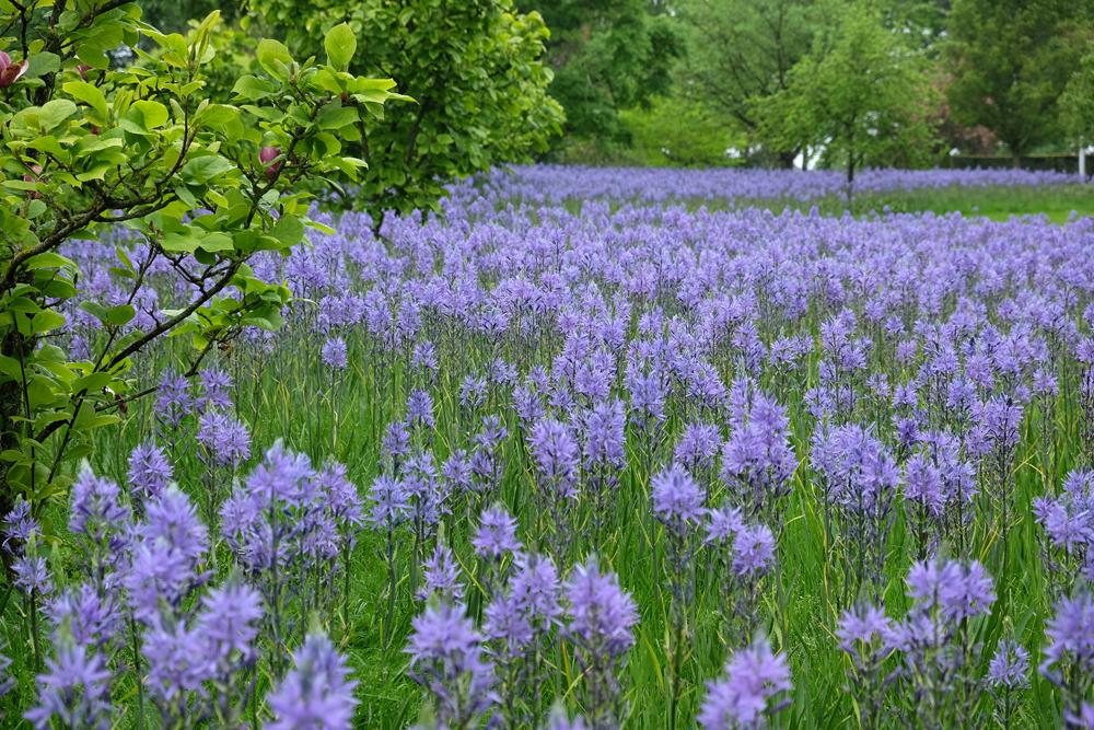 Gartenreise durch Südengland - RHS Garden Wisley