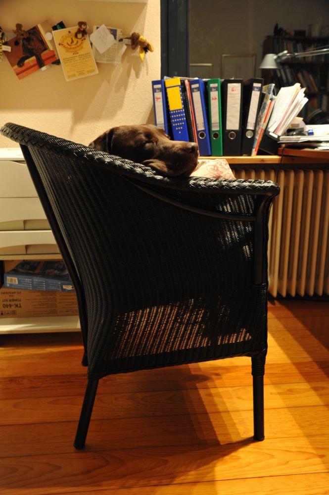 mein lieblingsplatz emma lieblingshund der redaktion garpa blog. Black Bedroom Furniture Sets. Home Design Ideas