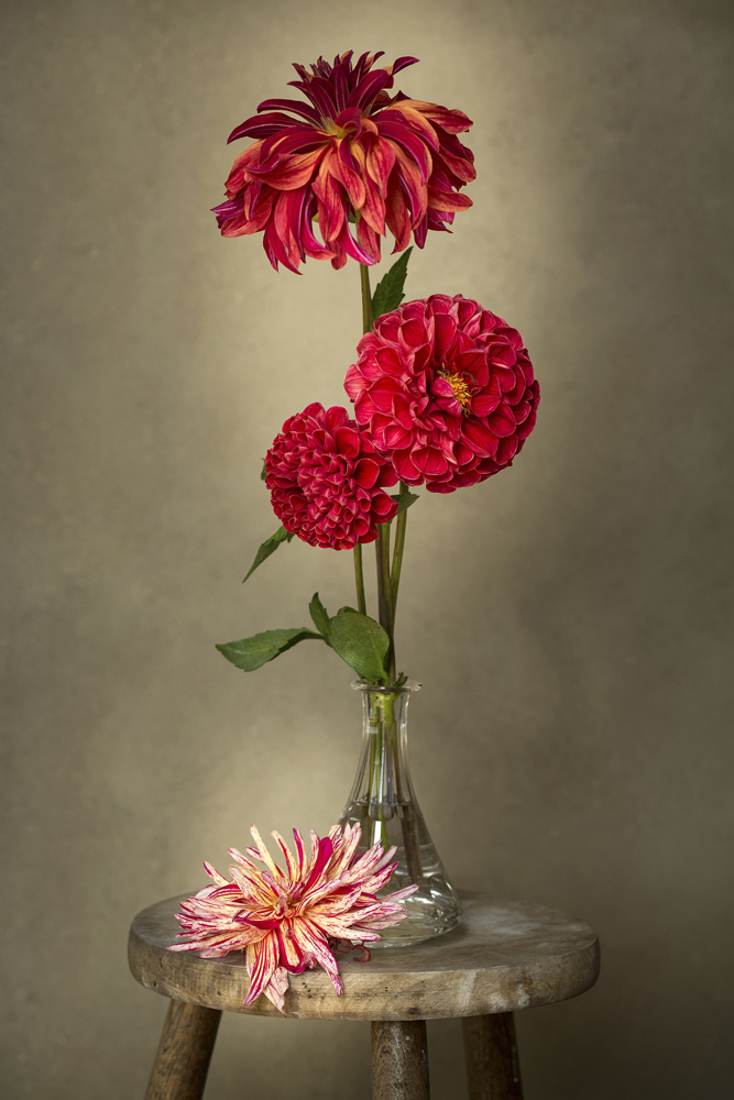 "© Sibylle Pietrek - ""Vase with Dahlias"" International Garden Photographer of the Year"